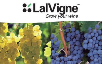 Lalvigne: un mundo de soluciones naturales para añadir valor a tus vinos.